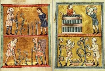 Vineyard History