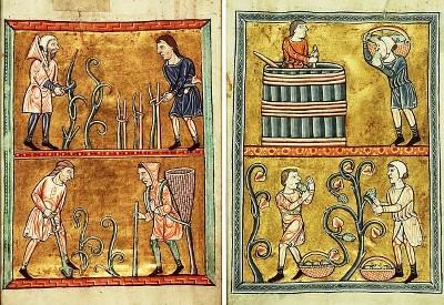 Histoire de la vigne